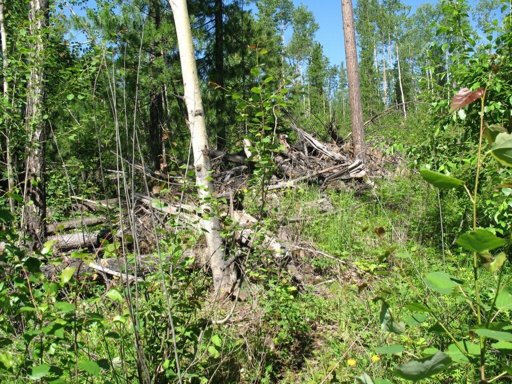 Тайга Приилимья (из былого) часто, метров, местах, растут, много, любит, тайгу, встречаются, ходить, деревья, через, совсем, тайге, почва, места, высотой, сопки, баланс, восстановить, попадаются