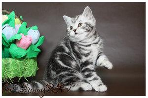 Лаптева-фото - Фотографии животных для питомников и заводчиков - Страница 4 0_12a257_d4801440_M