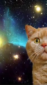 С днем уфолога и НЛО. Рыжий кот на фоне звезд открытки фото рисунки картинки поздравления
