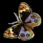 Бабочки  0_6b14a_69921b7a_S