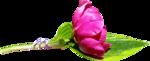 «CajolineHappyMothersDay» 0_6f504_4c2336a1_S