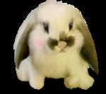 NLD Rabbit sh.png