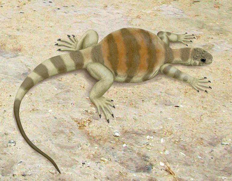 19. Pterodaustro Pterodaustro — это род меловых птерозавров из Южной Америки, который жили 105 милли