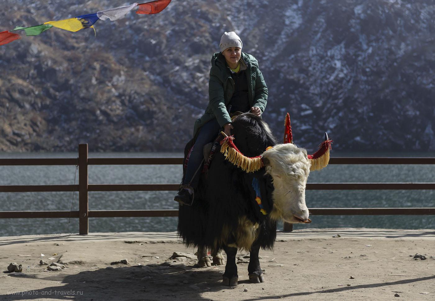 Фото 32. Отчет об экскурсии к озеру Тсонгмо (Tsongmo Lake) в Гималаях. Путешествие по Индии самостоятельно. 1/4000, -1.67, 3.2, 200, 70.