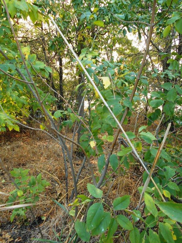 Лес, сентябрь ... DSCN1424.JPG