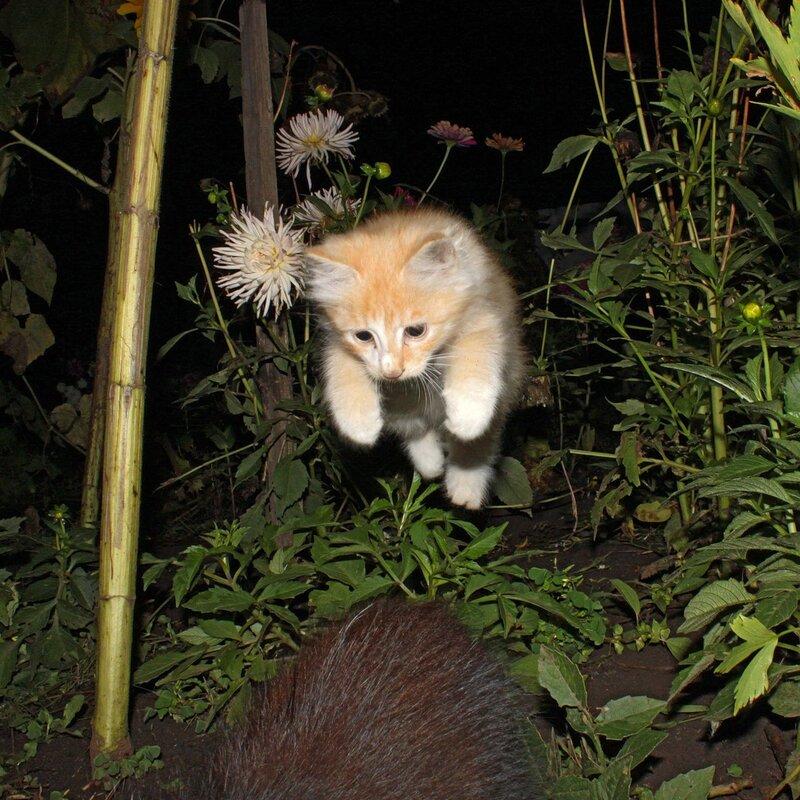 Ночной охотник.
