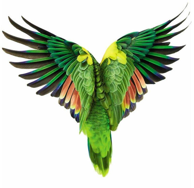 Даже если знать, что серия 'Птицы' Эндрю Цукермана (Andrew Zuckerman) - это высокого