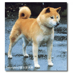 Beniougi Go Fujinomiya Kensha.png