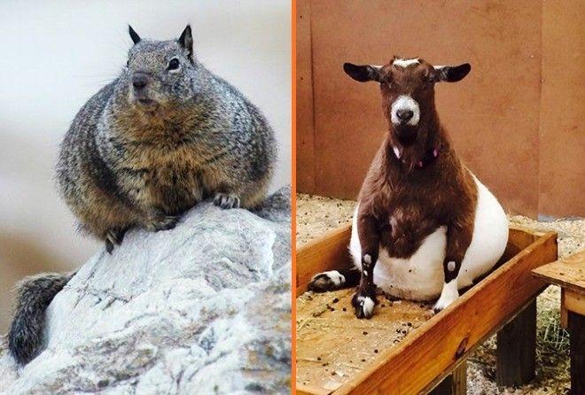 Беременность — она такая: самые очаровательные животные (16 фото)