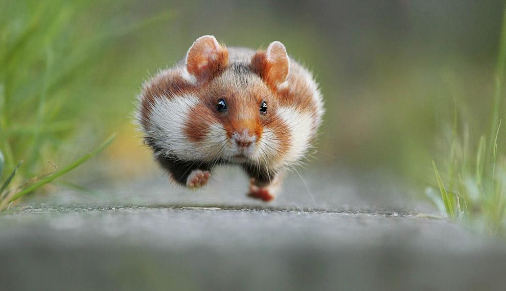 22. В шоке от состава продукта. (Фото Maigorzata Szypula | Comedy Wildlife Photography Awards):