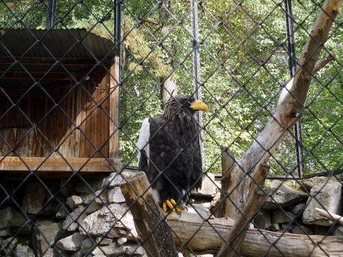 Новосибирский зоопарк. Орел