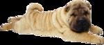 Собачки (84).jpg