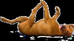 Собачки (169).jpg