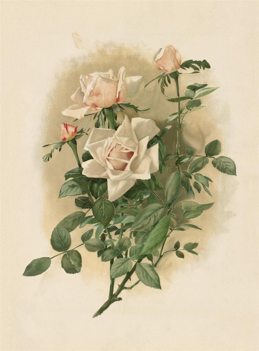 Картинки для декупажа цветы распечатать 4