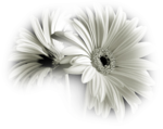 PatryMists_06_Flowers_162.png