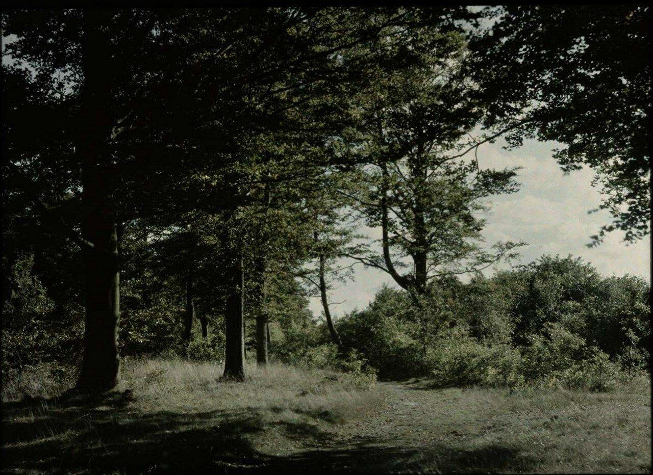 1907. Лесной пейзаж