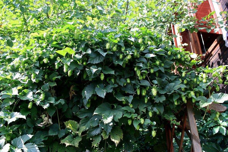 Сад соседки Людмилы