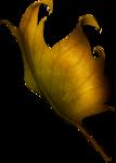 autumnleaf10.png