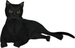 rs_blackcat7.png