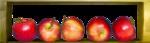 осенний мед (103)