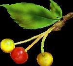 осенние тропинки (77)