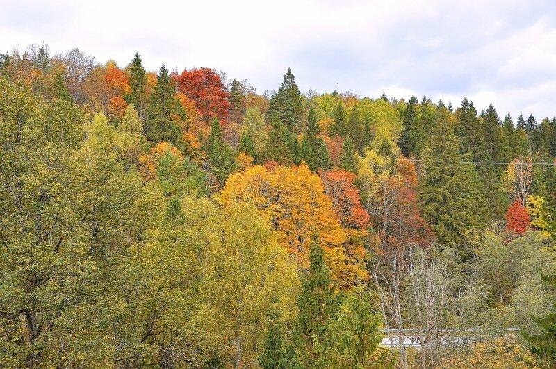 Золотая осень в Сигулде