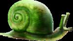 ldavi-paintersfaeries-snail2.png