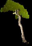 Secret Garden Tree.png