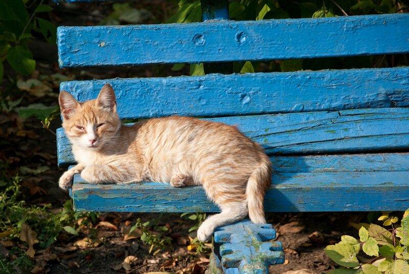 рыжий котенок спит
