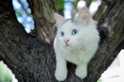 история про кошку уличный ангел