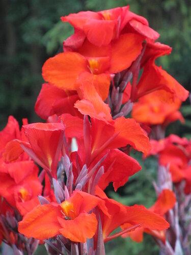 цветок для jyrnalist.ru воспоминания о лете