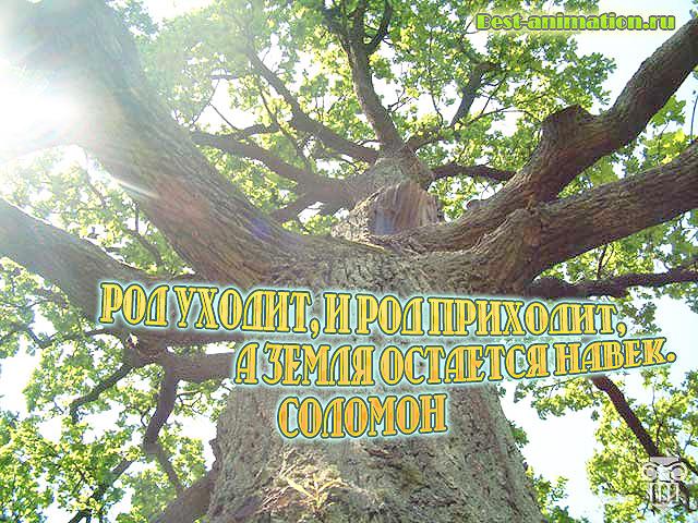 Цитаты великих людей - Сила природы, Красота природы – Род уходит, и род приходит...