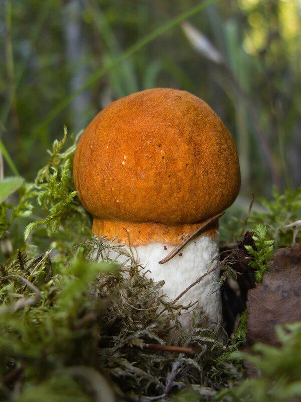 Собирать грибы - что может быть лучше!