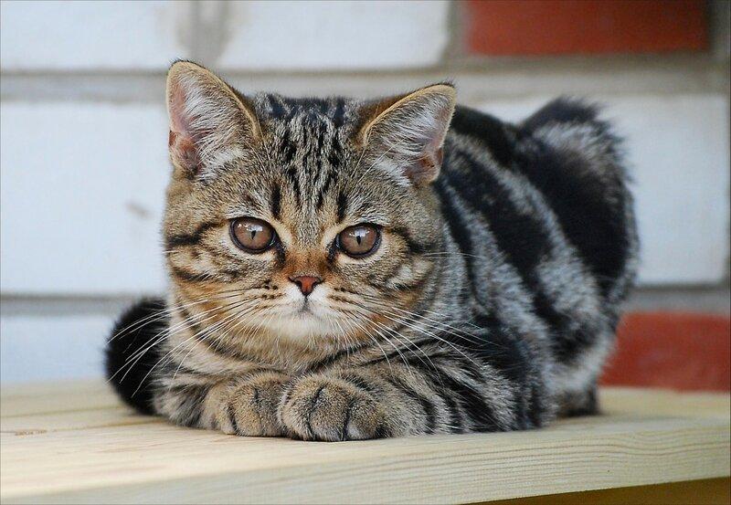 Не пойму тех, кто без кошки, до сих пор в дому живет