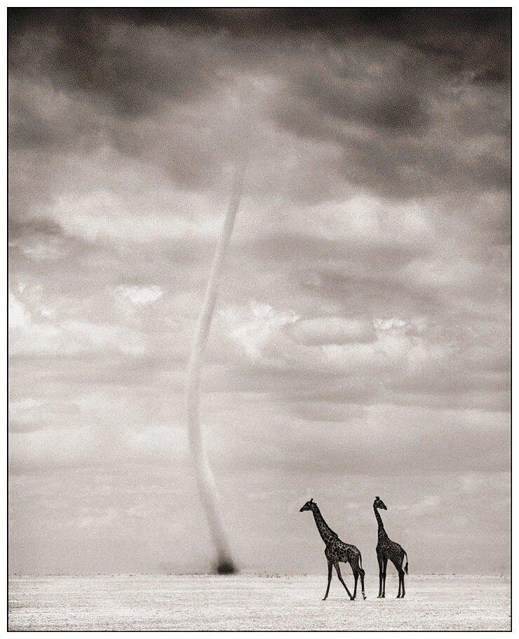 Nick Brandt.Africa