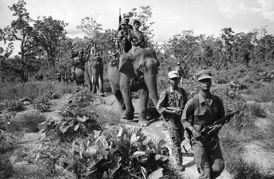 Elephant Military Transport Vietnam 1964