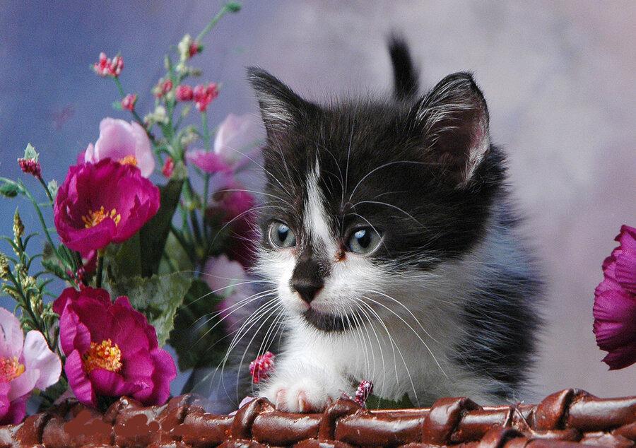 проконсультироваться ценам открытки животные с цветами кстати