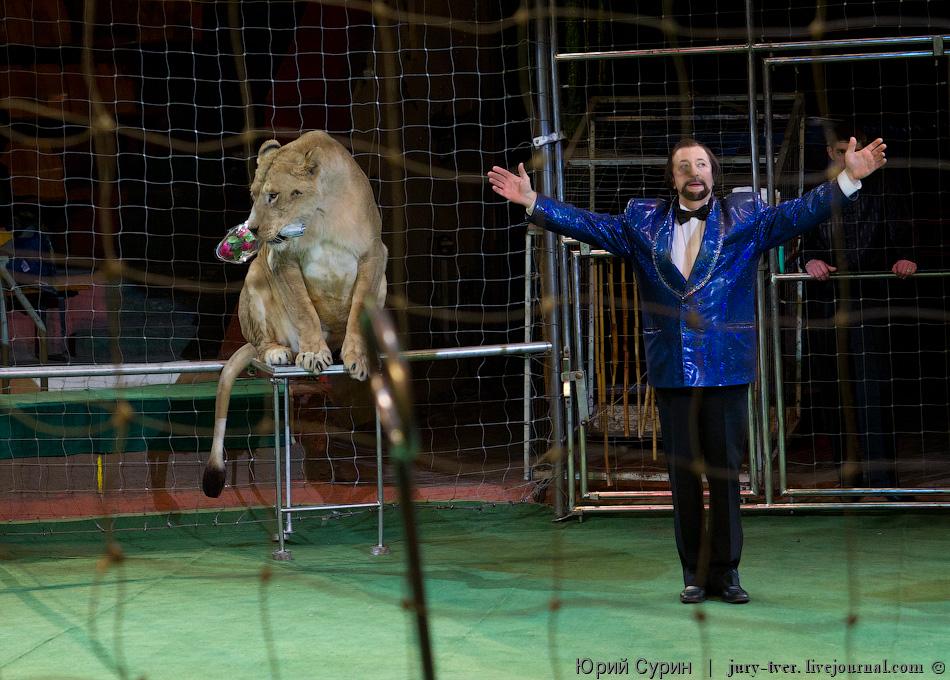 Доброволец, кстати желающих зайти в клетку со львом и пробыть там с ним на едине было не так и много, из всего зала...