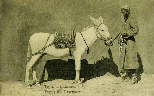 Туркестан. Ташкент. Ослик и его хозяин.