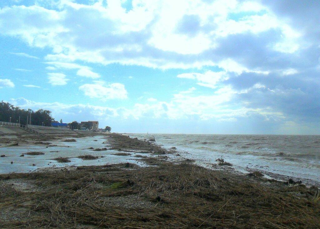 Камыш принесённый... , сентябрь, Азовское побережье, осенние картинки