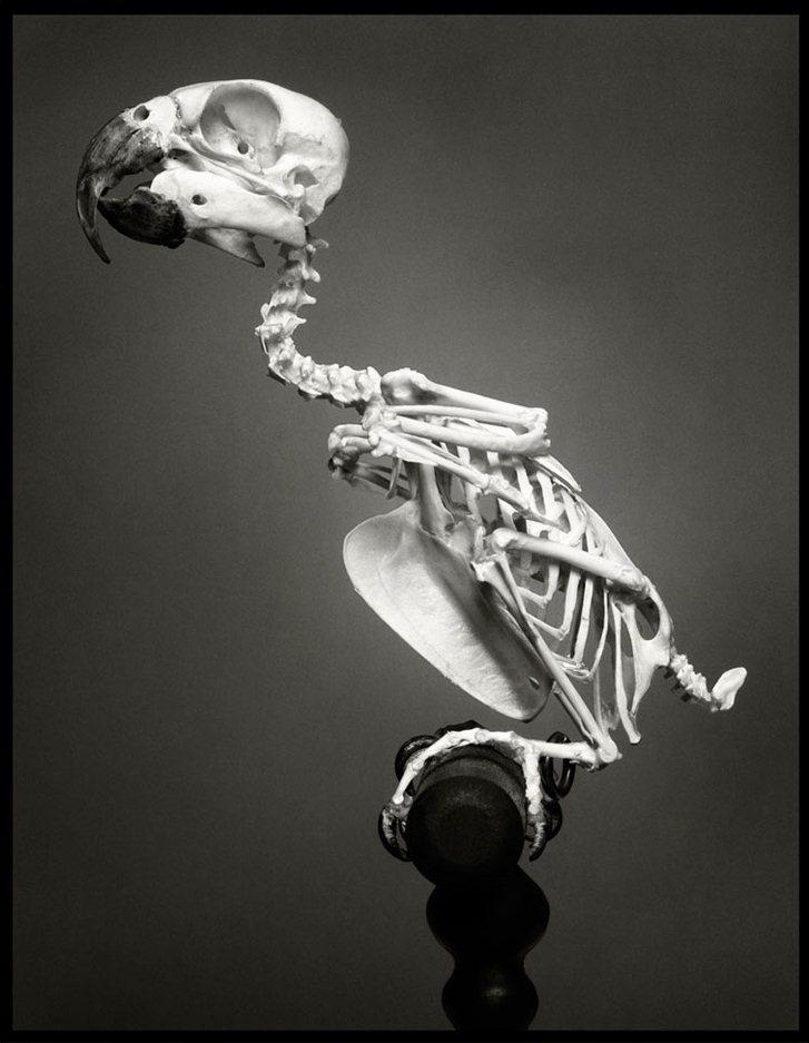 Toni Garrn by Greg Kadel / Тони Гаррн в журнале Numero-128