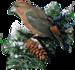 Bird_CibiBijoux.png