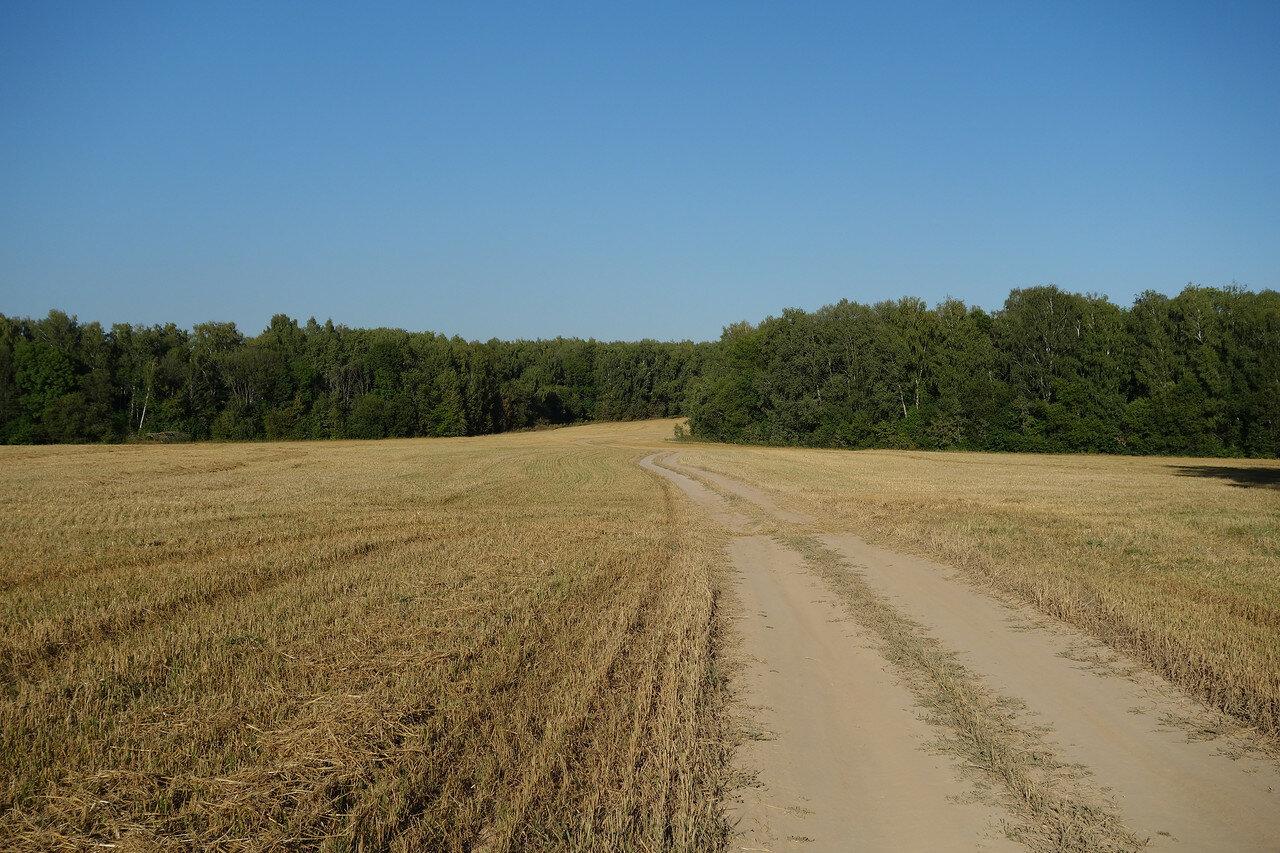 поле и лес на границе Щекинского и Дубенского уездов