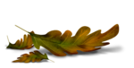 florju_autumnontheway_shadow (25).png