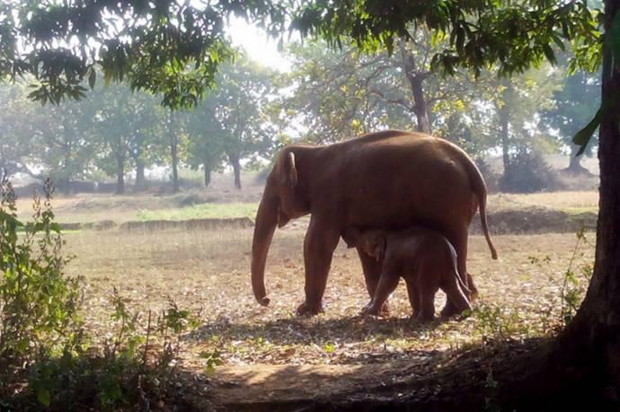 слониха спасла слоненка