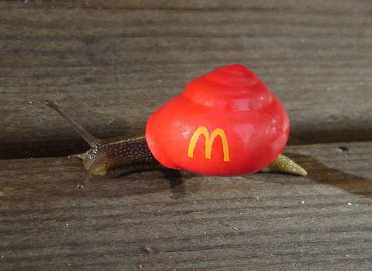 Улитка McDonalds