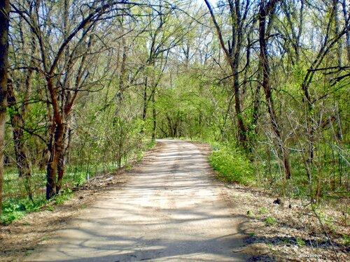 Шла дорога через лес