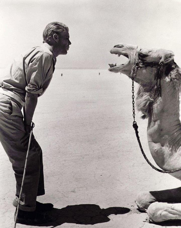 Peter O'Toole  Lawrence of Arabia 1962