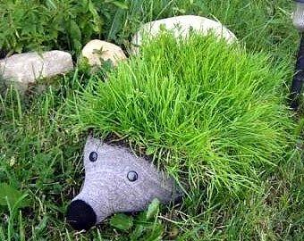 Ёжик садовый