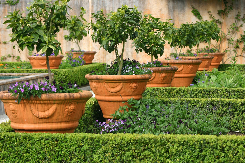Выращивание уличных растений в горшках 69